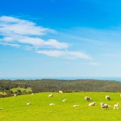 The Loving Shepherd Retreat Theme