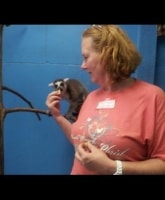 The lemur loves Mindi